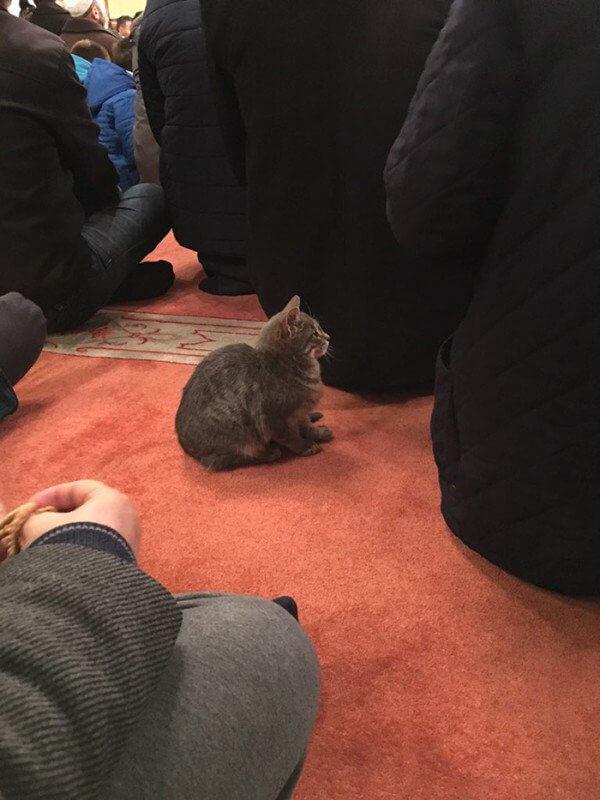 cat-mosque-Istanbul2-600x800