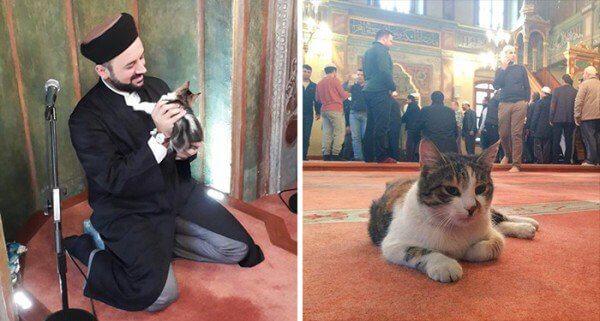 cat-mosque-Istanbul4-600x321