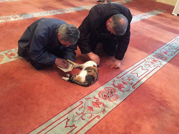 Kucing bersama jemaat di dalam mesjid Aziz Mahmud Hudayi