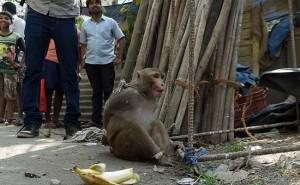 monkey_650x400_71454702638