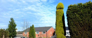 **EMBARGO FOR USE UNTILL 00:01 ON FEBRUARY 19TH 2016** PIC BY KORAY EROL/CATERS NEWS (Pictured: Chris Bishops penis shaped tree) - A whopping 18ft penis-shaped tree has been carefully crafted by its tree surgeon owner in a bid to make passers-by titter. Chris Bishop, from Bromsgrove, Worcestershire, has spent the last three years encouraging the 25-year-old Cypress tree to be a grower AND a shower before whacking out his specialist tools to give the tree its annual hourly trim. The monster member stands proud in Chris front garden much to the bemusement of his neighbours. SEE CATERS COPY