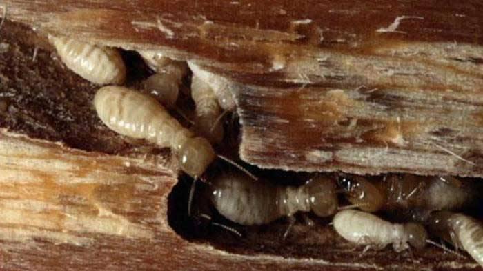 Macam-Macam Jamur yang Bisa Dimakan, Tidak Beracun dan Lezat Dibuat Camilan