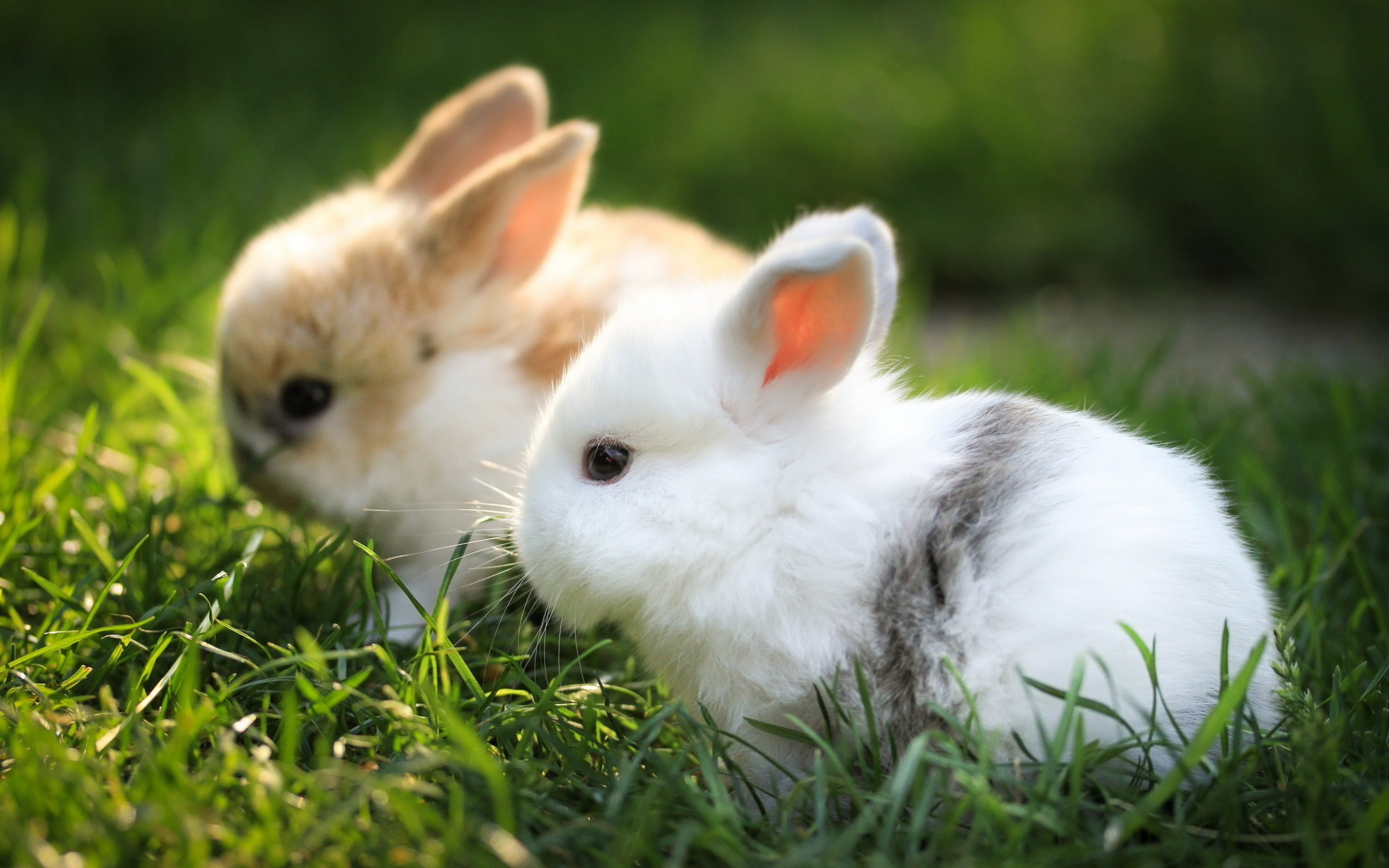 rabbits_couple_grass_fur_beautiful_44836_3840x2400