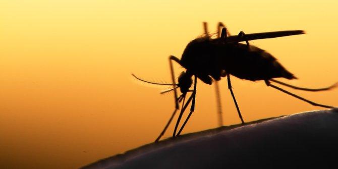 5 Penyebab Kamu Sering Digigit Nyamuk