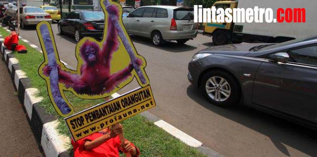 Orangutan Masuk 'Turun Gunung' Bikin Resah Warga di Aceh Selatan