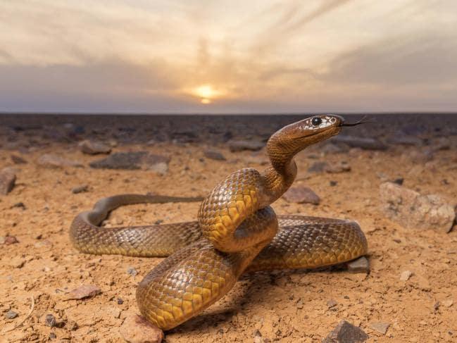 Hewan Paling Beracun Dan Mematikan di Dunia.