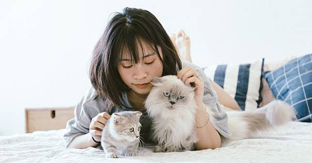 5 Cara Merawat Kucing Anggora yang Baik dan Benar