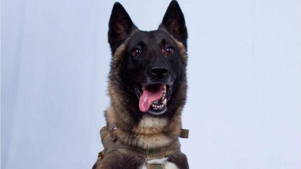 5 Fakta Anjing Pasukan Elite AS yang Ikut Memburu Bos ISIS di Suriah