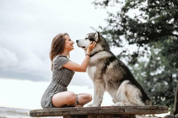 http://lintasmetro.com/pelajari-dampak-yang-dapat-membuat-anjing-peliharaan-stress/