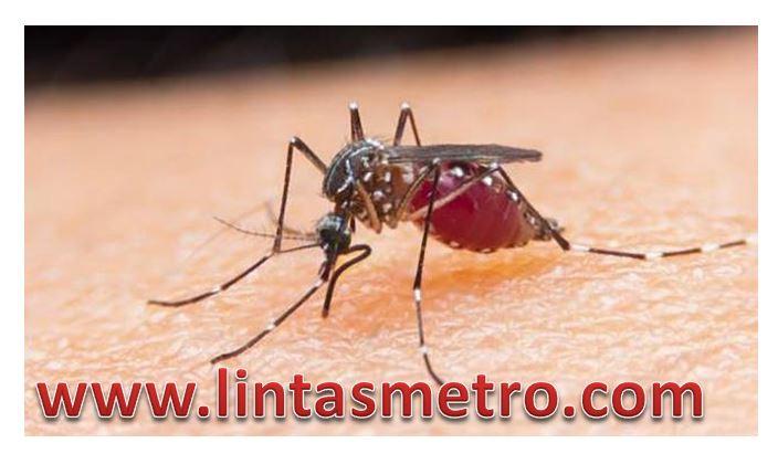 Menggaruk Bekas Gigitan Nyamuk Sangat Berbahaya